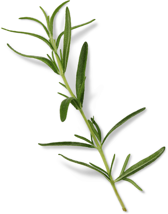 Lab Effects Rosemary Sprig