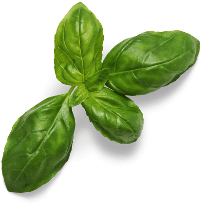 Lab Effects Basil