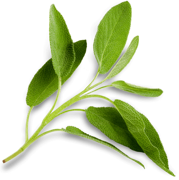 Lab Effects Flavor Enhanced Profile Sage Sprig