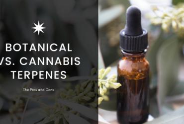 Cannabis Derived Terpenes Vs. Botanically Derived Terpenes