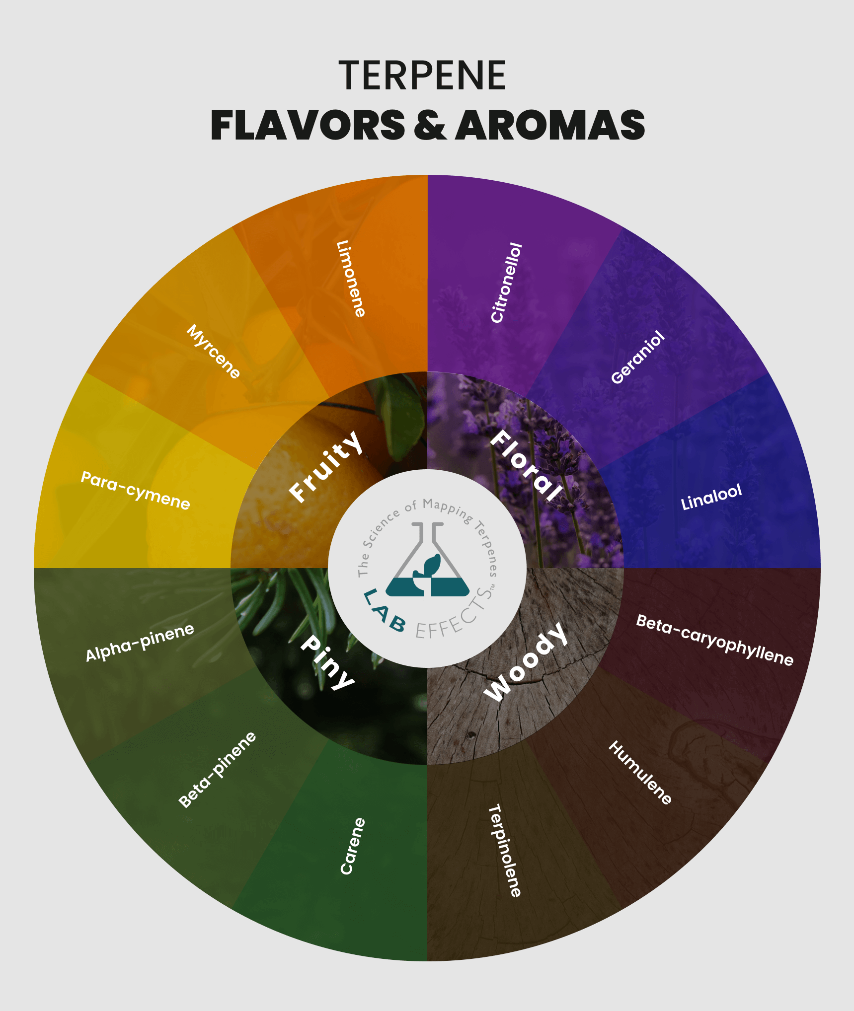 lab effects terpene flavors terpene aroma infographic