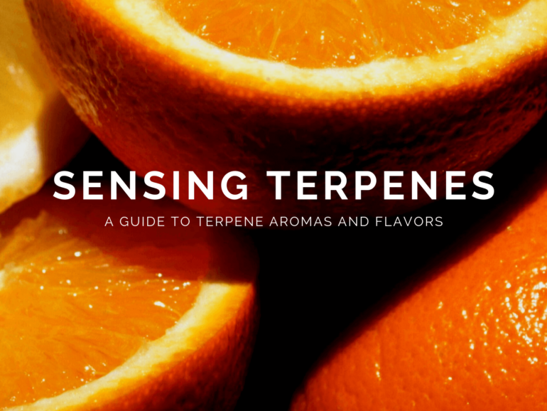 Sensing Terpenes: A Guide to Terpene Aromas and Flavors