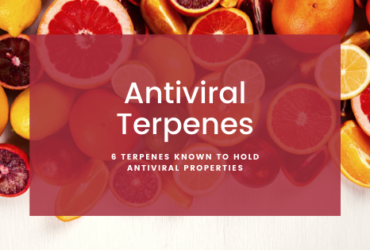 6 Terpenes Known to Hold Antiviral Properties
